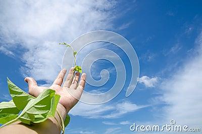 Hand on sky