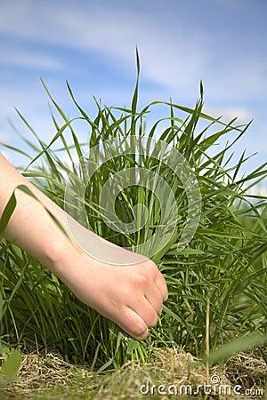 Hand tearing a grass