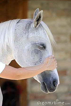 Hand touching horse head