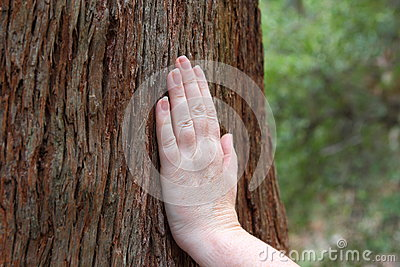 Hand on tree trunk