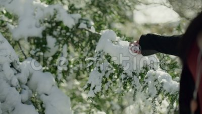Hand of unrecognizable woman touching branch of evergreen tree with snow. Hand of unrecognizable woman touching branch of evergreen tree with snow stock video