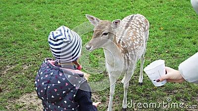 Hand van Little Girl Feeding Roe Deer in een Park stock video