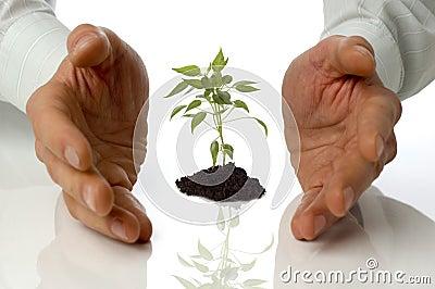 Handen die kleine installatie tot een kom vormen