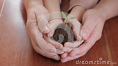 Handen van bejaarde en baby die een jonge groene installatie op houten lijst houden Het concept van de ecologie stock video