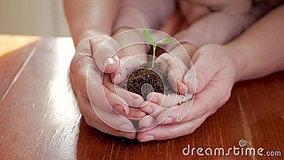 Handen van bejaarde en baby die een jonge groene installatie op houten lijst houden Het concept van de ecologie stock videobeelden