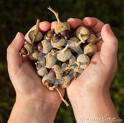 Handful Nut Seeds
