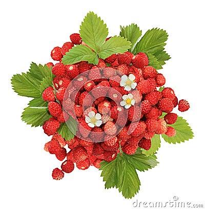 Free Handful Of Wild Strawberries Royalty Free Stock Image - 27551106