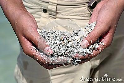 Handful of sand and seashells