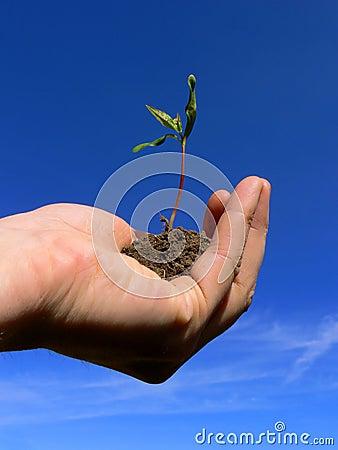 Handling Growth