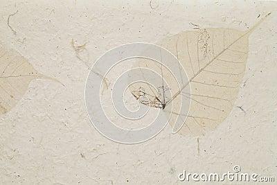 Handmade leaf paper