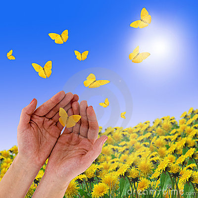 Free Hands And Butterflies Stock Photography - 6720272