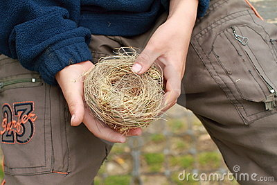 Hands of a boy with a nest