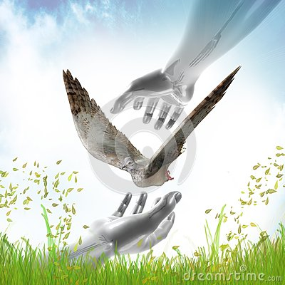 Hands catching dove for peace symbol