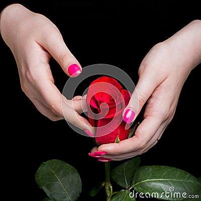 Hands of girl carefully holding red rose on black