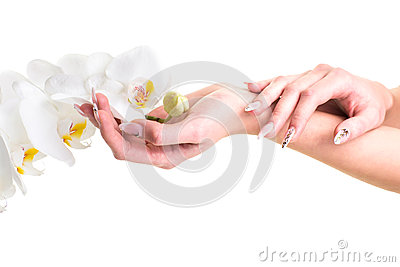 Hands of the girl holding an orchid on isolated white
