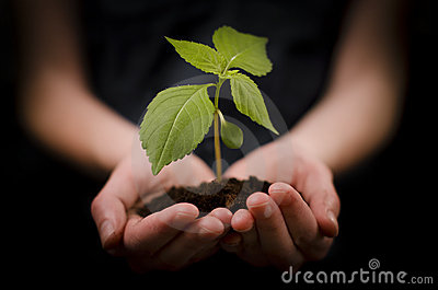 Hands holding baby plant or Growth and Development