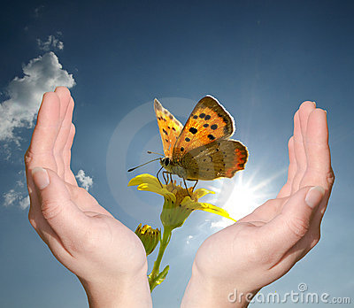 Hands holding flower butterfly