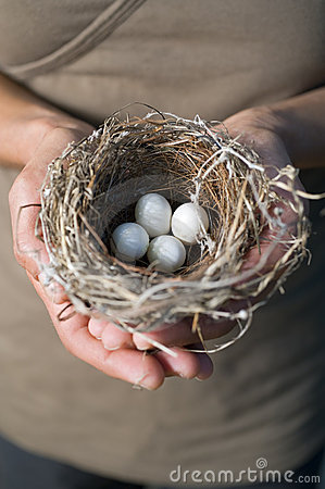 Hands holding nest with eggs
