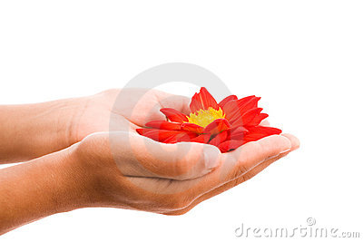 Hands holding red flower