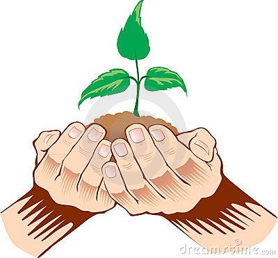 Hands holding sapling in soil