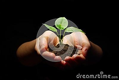Hands holding sapling  soil