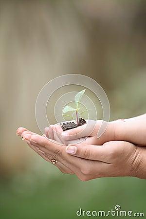 hands holding seedlings