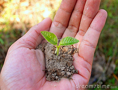 Hands holding a small green plant