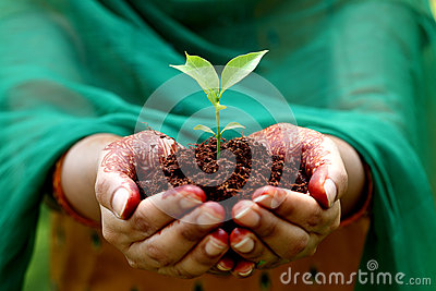 Hands holding small plant