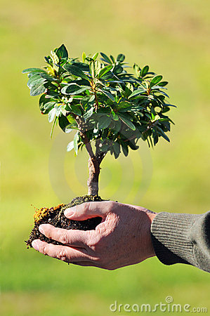 Hands Holding Small Tree