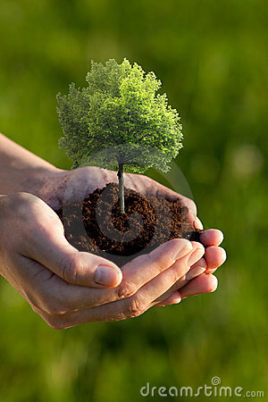 Free Hands Holding Small Tree Royalty Free Stock Photo - 9704145