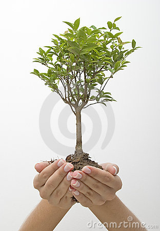Hands holding tree