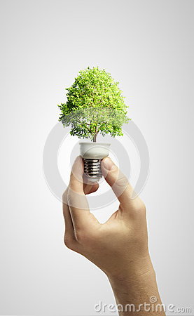 Hands holding tree growing out of electric bulb