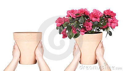 Hands keep flower pot