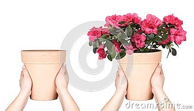 Hands keep flower pot