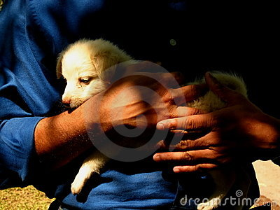 Hands of man holding puppy dog