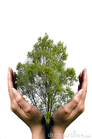 Hands protecting a tree