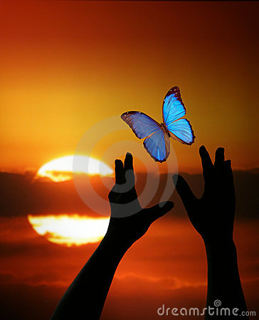 Hands reaching for Butterly