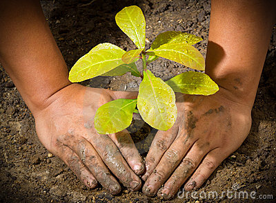 Hands and tree ground plant