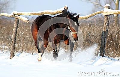 Handsome colt