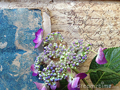 Handwriting from 18th century with flowers and book