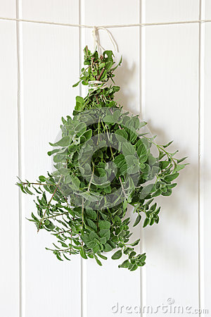 Hanging Bunch of Oregano