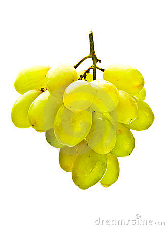 Hanging bunch of white grape