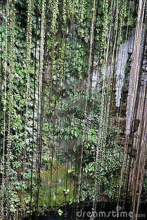 Hanging Cenote Vines
