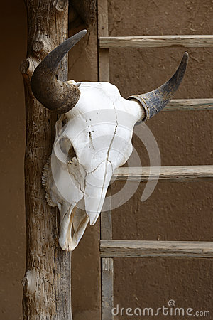 Hanging cow skull