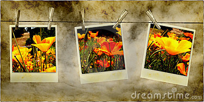 Hanging Flower Photos