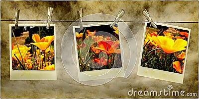 Hanging Flower Photos