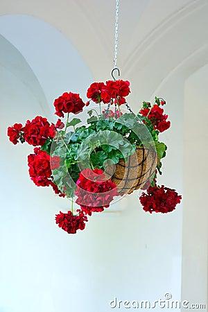 Free Hanging Flower Pot Royalty Free Stock Photo - 95393095