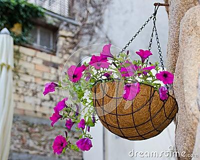 Hanging flowers basket