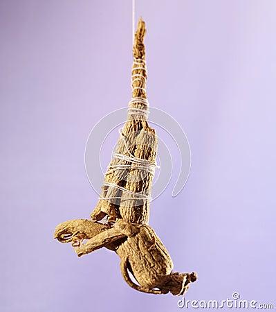 Hanging ginseng root