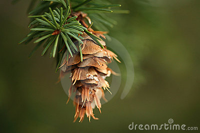 Hanging pine cone